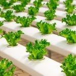 גידול הידרופוני משנה את העולם