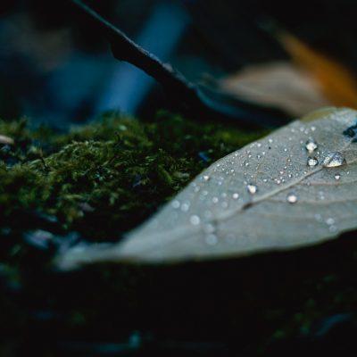 5 סודות לניהול הלחות בגינה ההידרופונית: סופח לחות, טמפרטורה ואוורור