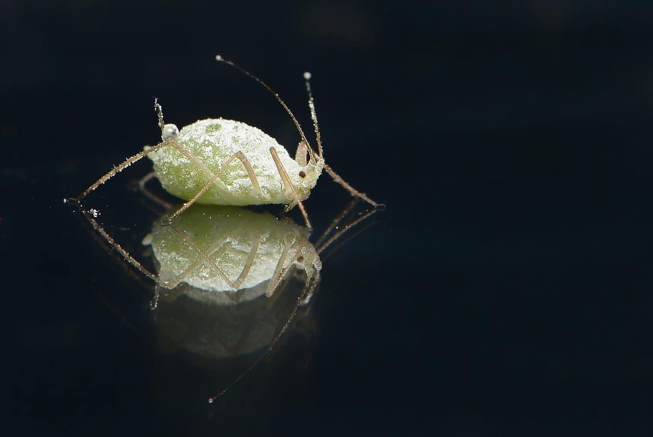 סרטון הדרכה: אבחון חרקים ובעיות אחרות